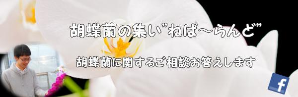 """胡蝶蘭診療所""""ねばーらんど"""""""