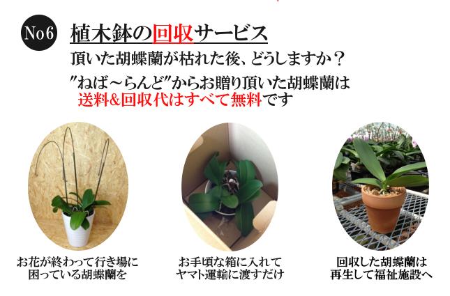 胡蝶蘭の花植木鉢回収サービス